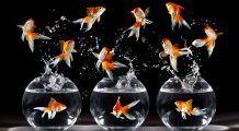 Atenția oamenilor e egală cu cea a unui peștișor! BONUS – 3 metode să îți menții atenția