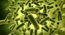 Probioticele, prebioticele si antibioticele