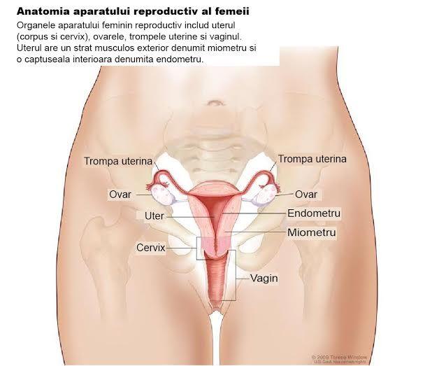 Alaptatul si legarea trompelor reduce riscul de cancer ovarian. Ce rol au genele