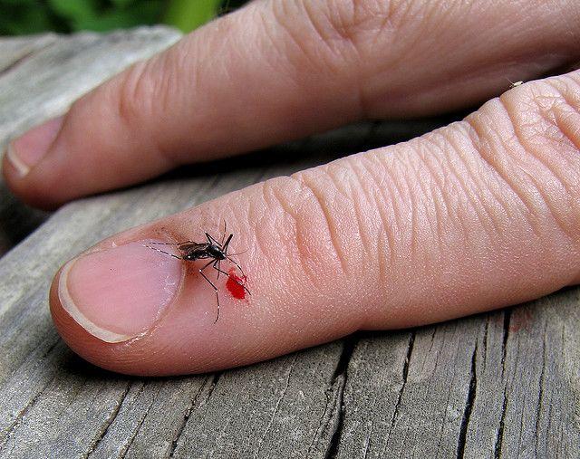 Cum îți dai seama câd o mușcătură de țânțar trebuie tratată de medic