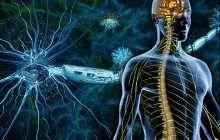 Descoperire importantă despre scleroza multiplă