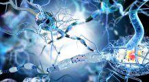 ExMedica. Medicul care face minuni pe creier consultă gratuit primii 30 de suferinzi de epilepsie, programați