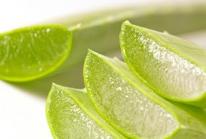 """""""Medicamentul"""" miraculos care crește în ghiveci și tratează peste 100 de boli. I se spune și planta nemuririi"""
