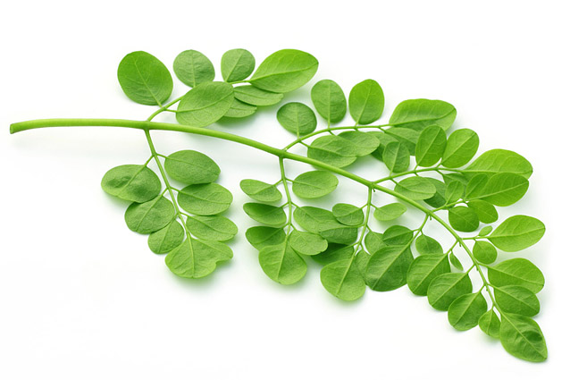 Descoperire uimitoare: această plantă poate trata 5 tipuri de cancer