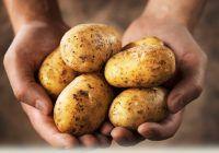 Cartofii – buni pentru sănătate sau de evitat deoarece îngrașă. Află răspunsul