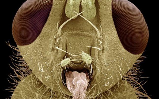 Alergia la acarieni, boala din dormitorul tău