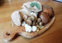 Ciupercile, cea mai bună carne! Ce anume le conferă o nepreţuită calitate curativă