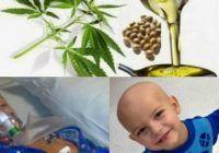 Proiect de lege pentru consumul canabisului cu prescripţie de la medicul specialist