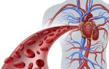 Obiceiul care îmbătrânește prematur vasele de sânge