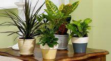 Recomandarea NASA: 18 plante care purifică aerul din casă