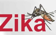 Virusul Zika ar putea ajunge în România. Țânțarii care transmit boala au fost descoperiți la Marea Neagră