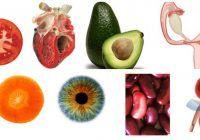 TRATAMENTE MIRACULOASE! Natura ne spune ce ne VINDECĂ dând plantelor forma organelor BOLNAVE