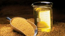 Un aliment de post considerat sănătos distruge memoria și produce dezechilibre hormonale