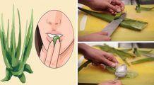 Iată ce minuni poate face Aloe Vera pentru întreg organismul. Nu degeaba, egiptenii o numeau planta nemuririi