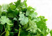 Cura miraculoasă de două săptămâni! Planta care regenerează FICATUL este MEDICAMENTUL naturii