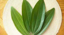 Fierbe aceste două frunze și poți să scapi de diabet
