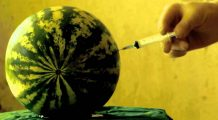 Pepenii pot fi injectați cu substanțe toxice. Cum îi recunoști?