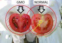 Cum să deosebești roșiile sănătoase de cele pline de chimicale