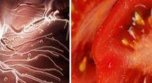 Descoperire revolutionara! Aceste alimente omoara celulele canceroase
