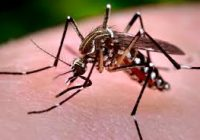 Virusul West Nile: Cine are cel mai mare risc și ce simptome apar dacă ai fost infectat?