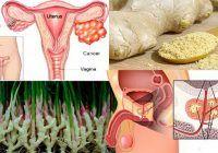 """Această rădăcină miraculoasă este mai puternică decât chimioterapia. Distruge cancerul și """"purifică"""" sângele"""