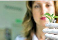 """""""Celulele stem"""" din plante vindecă, regenerează și întineresc întreg organismul. Iată cât de ușor le putem obține"""