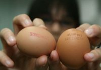 Milioane de ouă din mai multe ţări europene, inclusiv România, au fost retrase din magazine din cauza contaminării cu un insecticid toxic