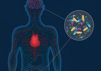 Bacteriile din intestine ar putea fi de vină pentru apariția bolii Parkinson
