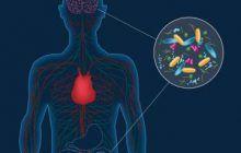 Legătura neașteptată dintre boala Parkinson și bacteriile din intestine