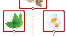 Trei plante esențiale pentru sănătatea stomacului
