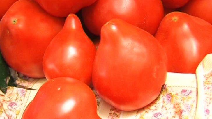 Un cercetător român spune adevărul despre roșiile țuguiate. Sunt sau nu cancerigene?