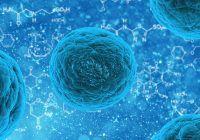 Cum poți accesa bani de la Stat pentru transplantul de celule stem