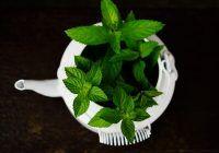 Planta care îți taie POFTA de mâncare. Ar trebui să fie nelipsită din casă