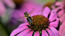 Cele mai EFICIENTE 11 ANTIBIOTICE  naturale. Fac MINUNI pentru sănătate