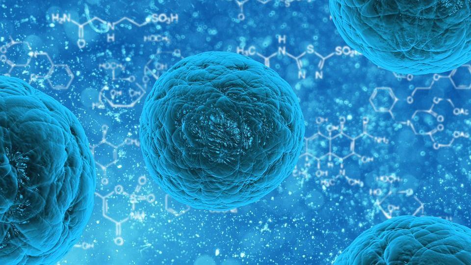 Depozitele de grăsime enervante ne-ar putea salva viața. Savanții transformă celulele de grăsime în celule stem