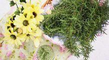Oamenii de știință au descoperit PLANTA care combate DEMENȚA și îmbunătățește MEMORIA cu 75%