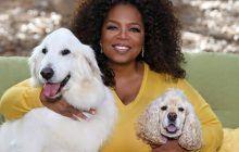 """""""O povară IMENSĂ, fizică și psihică"""". Oprah a spus ADEVĂRUL despre DRAMA kilogramelor sale în plus"""
