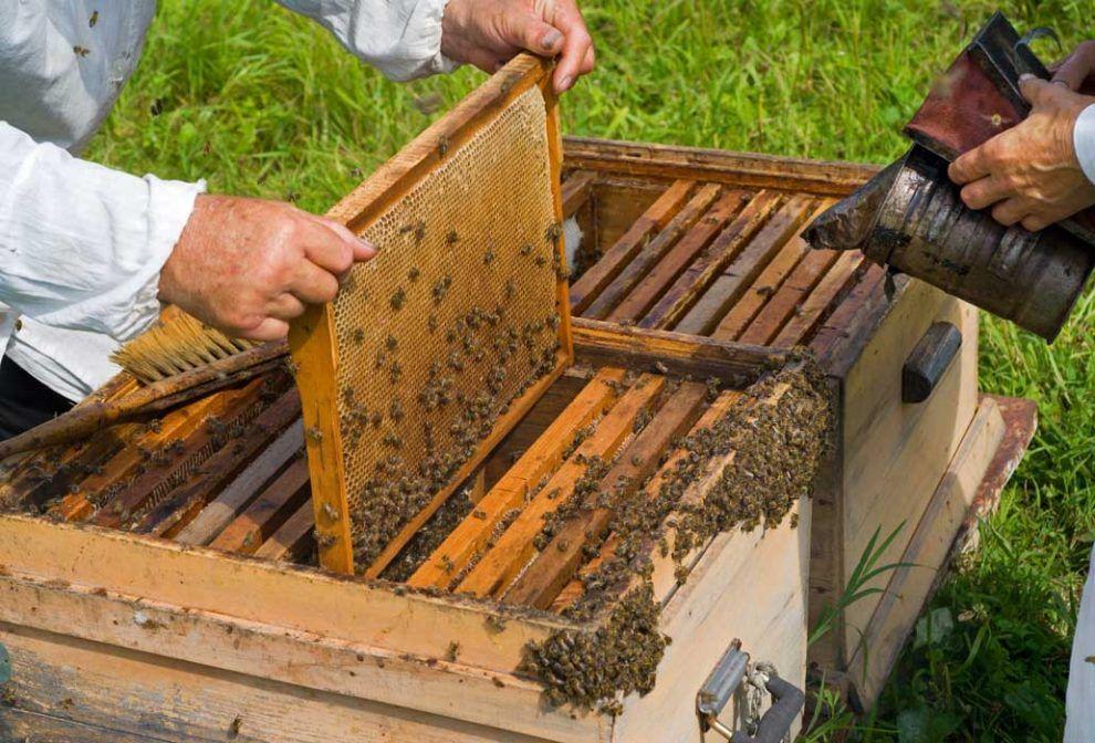 Doi oameni au murit și altul a intrat în șoc anafilactic după ce au fost atacați de un roi de albine