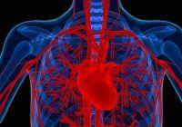 Șapte metode prin care vă puteți menține arterele sănătoase, la orice vârstă. Așa preveniți bolile cardiovasculare