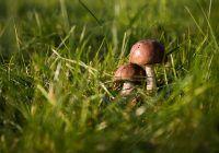 Avertisment privind pericolul reprezentat de intoxicațiile cu ciuperci