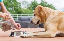 Cât de sănătoasă este mâncarea cu care îți hrănești câinele? Știi câte E-uri îi servești?