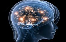 Cercetătorii de la Harvard au dezvăluit metoda cea mai simplă prin care oricine își poate reîntineri creierul