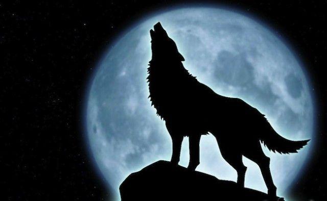 Luna Plină a Vânătorului  din 24 octombrie vine cu schimbări dramatice și profunde semnificații spirituale. Acum decizi ce ești: vânat sau vânător?