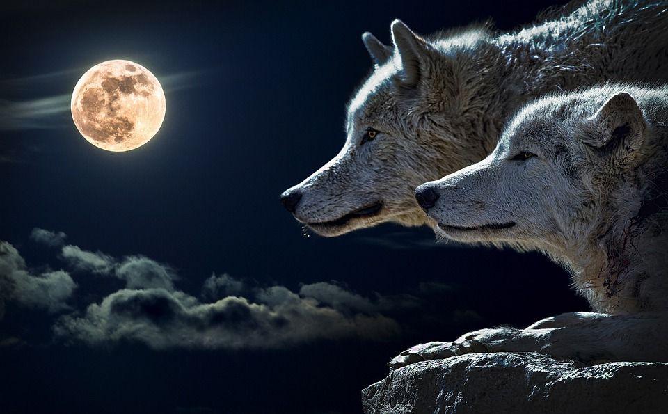 Eclipsa totală de Lună Sângerie a Lupului ne afectează pe toți în sectorul relațiilor. Ce ne așteaptă după acest punct culminant