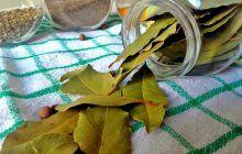 Frunzele care îți țin sub control glicemia