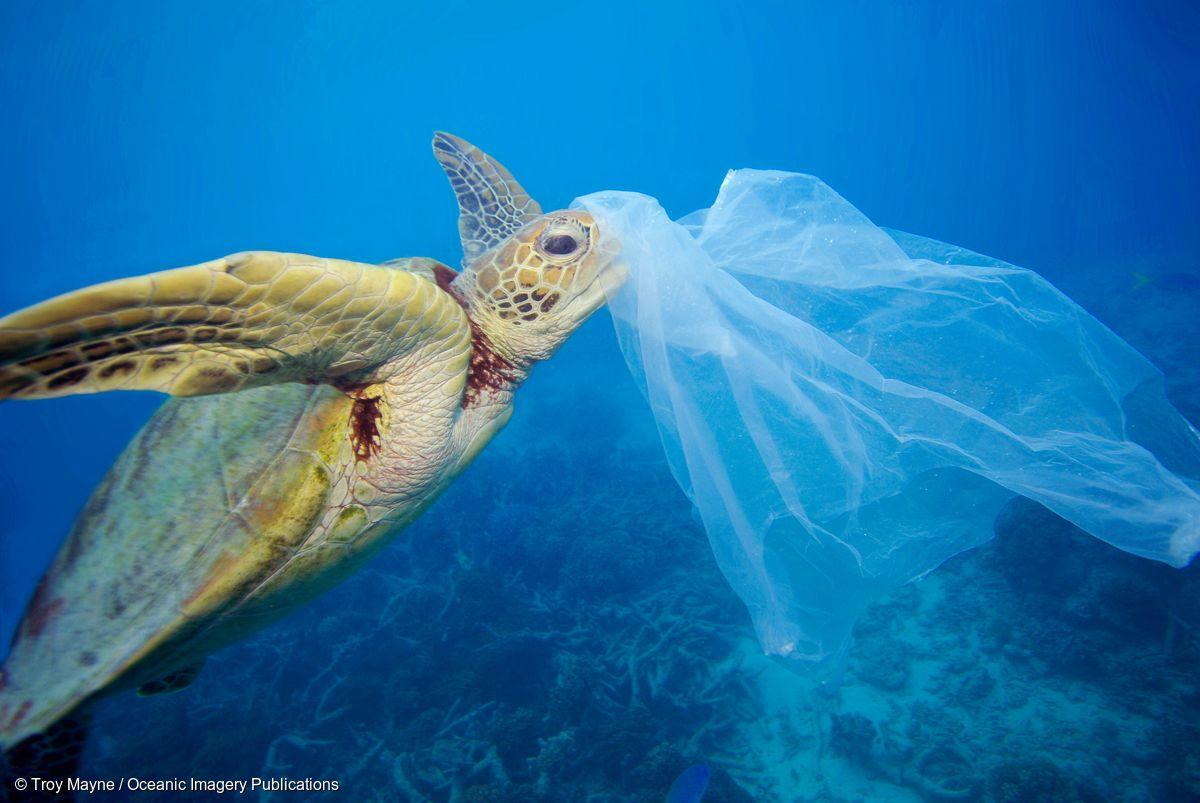 Populația marină, îmbibată cu plastic. Fibre de plastic în intestinele a 100% dintre exemplarele din cel mai adânc loc din lume