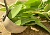 Planta miraculoasă. Mulți nu îi cunosc beneficiile uluitoare și proprietățile purificatoare