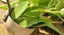 Cum combați natural tristețea, stresul și anxietatea. Plante valoroase care ne ajută zilnic, cu adevărate proprietăți tămăduitoare