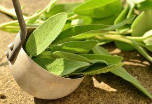 Planta miraculoasa. Mulți nu ii cunosc beneficiile uluitoare si proprietațile purificatoare
