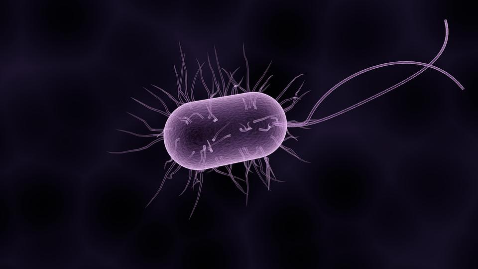 Helicobacter pylori, prima bacterie implicată în dezvoltarea unei forme de cancer
